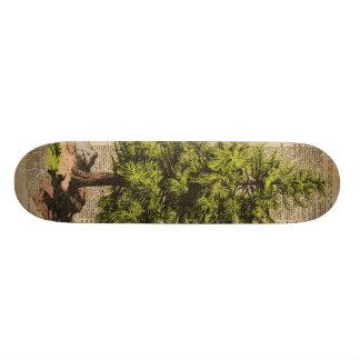 Pine,Cedar Tree,Christmas Tree Dictionary Art, Skateboard Deck
