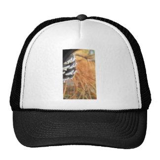 pine cone and golden needles trucker hat