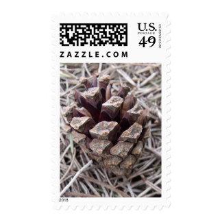 Pine Cone And Pine Needles Postage
