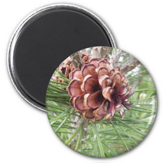 pine cone array magnet