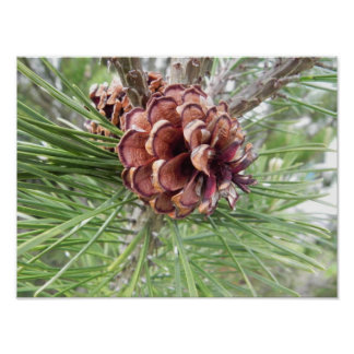 pine cone array posters