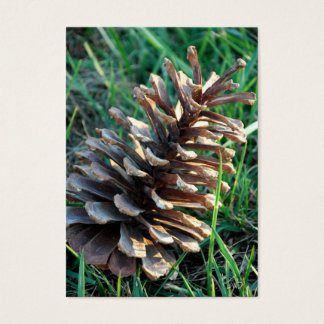 Pine Cone Gift Tags