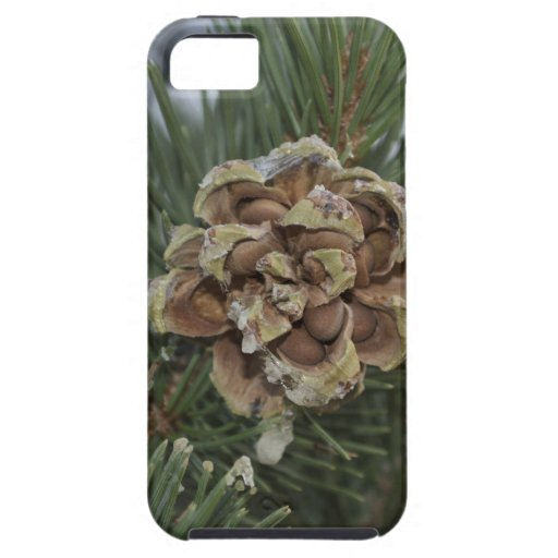 pine cone iPhone 5 covers