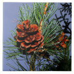 Pine Cone on Pine Branch Ceramic Tiles