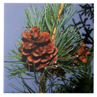 Pine Cone on Pine Branch Tile