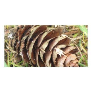 Pine Cone Photo Card