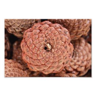 Pine Cone Art Photo