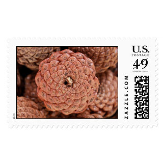 Pine Cone Postage Stamps