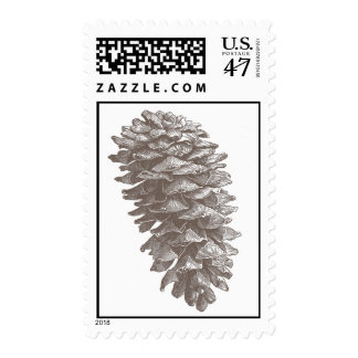 Pine Cone Stamp