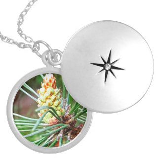 Pine cone tree needles photograph silver plated necklace