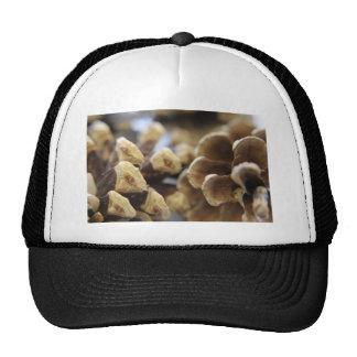 pine cone trucker hat