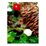 Pine Cone With Ivy Post Card