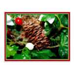 Pine Cone With Ivy Postcards