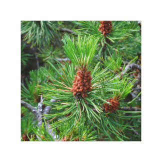 pine cone wrapped canvas
