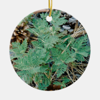 Pine Cones and Fern Ornament