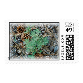 Pine Cones and Fern Postage