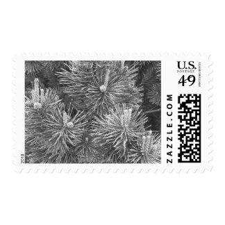 Pine cones and needles postage