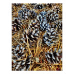 Pine Cones and Pine Needles Poster