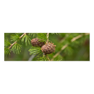 Pine Cones Business Card Template