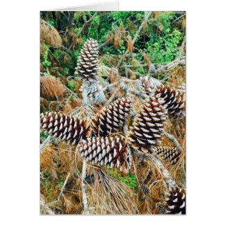 Pine Cones in South Carolina on Card