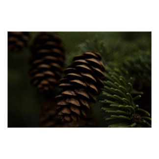 Pine Cones in the Woods Nature Photography Poster