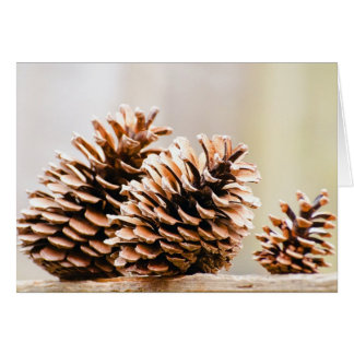 Pine Cones Note Card