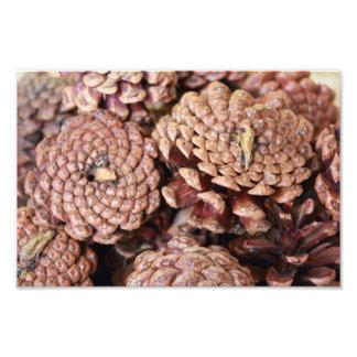 Pine Cones Art Photo