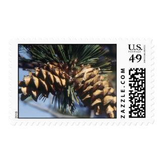 Pine Cones Postage