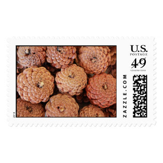 Pine Cones Stamp