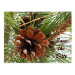Pine Cones Save the Date Postcard