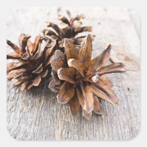 Pine cones square sticker