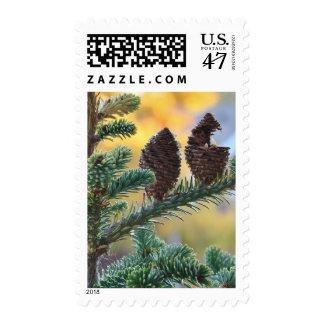 Pine Cones Woodlands Nature Scene Postage