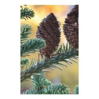 Pine Cones Woodlands Nature Scene Stationery