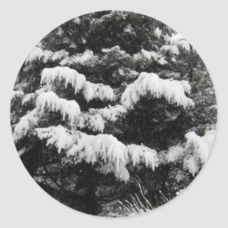 Pine Covered in Lowland Snow Olympia WA Classic Round Sticker