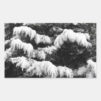 Pine Covered in Lowland Snow Olympia WA Rectangular Sticker