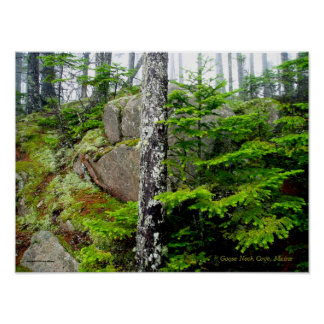 Pine Forest, Deer Island, Maine Poster
