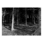 Pine Forest Poster/Print