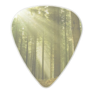 Pine forest with sun shining acetal guitar pick