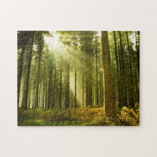 Pine forest with sun shining puzzle