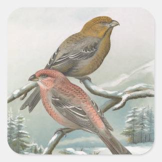 Pine Grosbeak Vintage Bird Illustration Square Sticker