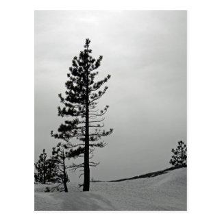 Pine in snow postcard