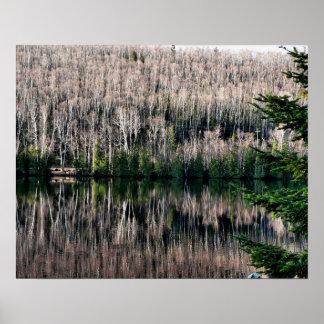 Pine Lake Reflection Print