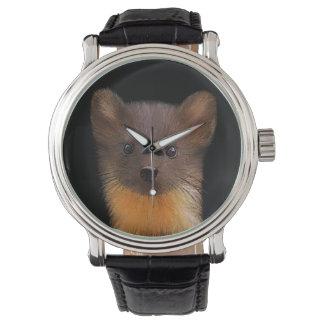 Pine Marten Watch