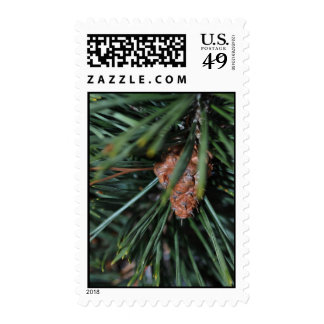 Pine Needle Postage Stamp