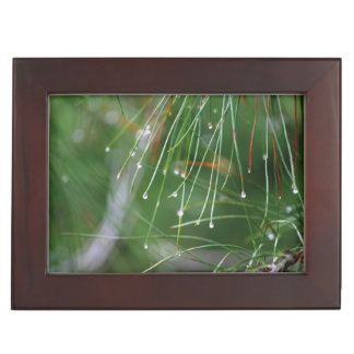 Pine Needles After the Rain Memory Boxes