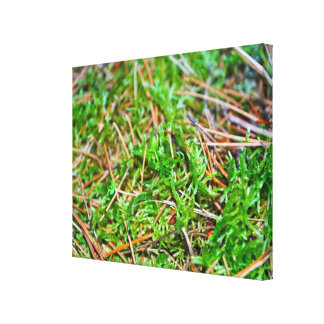 Pine Needles and Moss Canvas Print