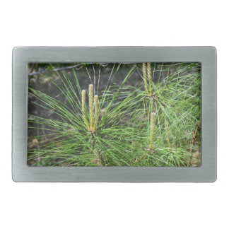 Pine Needles by Kenneth Yoncich Belt Buckle