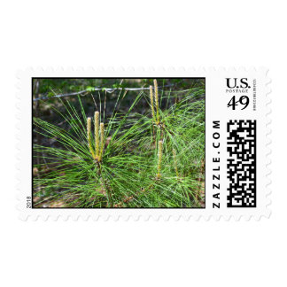 Pine Needles by Kenneth Yoncich Postage