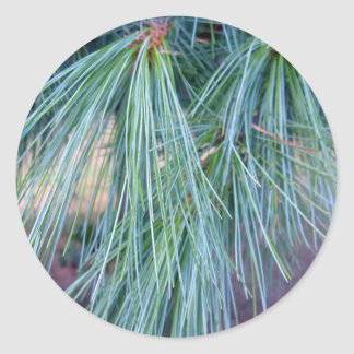 Pine Needles Classic Round Sticker