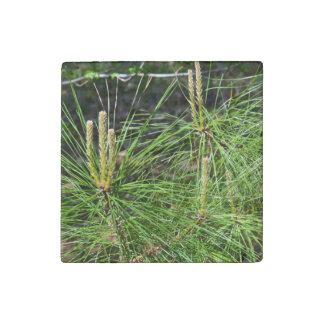 Pine Needles Stone Magnet